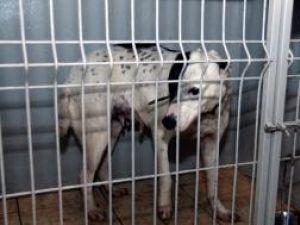 Unul dintre câinii criminali de la Rotunda-Liteni