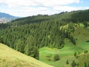 Statul român, prin Direcţia Silvică Suceava, rămâne în continuare proprietar pe pădurile Bucovinei