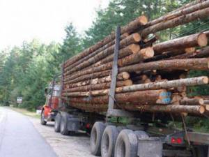 Exploatarea lemnului, o miza foarte importantă, care poate duce la violente grave. Foto: evz