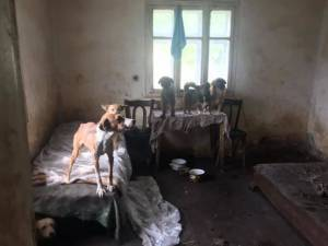 Imagini de coşmar în casa bătrânei