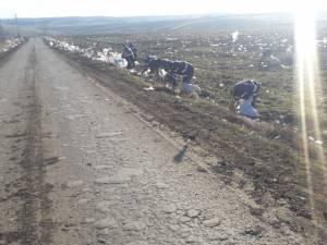 4-5 tone de gunoaie împrăștiate de vânt, pe o rază de 1 km în jurul depozitului de deșeuri de la Moara