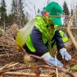 Programul de reîmpădurire Pădurea de Mâine încheie o nouă etapă