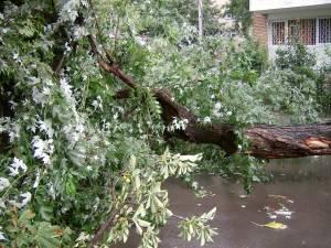 Compania de distribuţie de electricitate solicită sucevenilor să nu planteze copaci sub liniile electrice