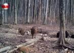 Efectul Cernobîl